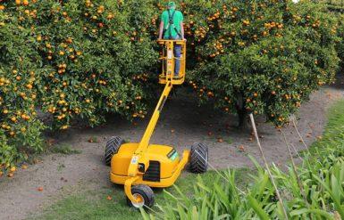 hydralada citrus